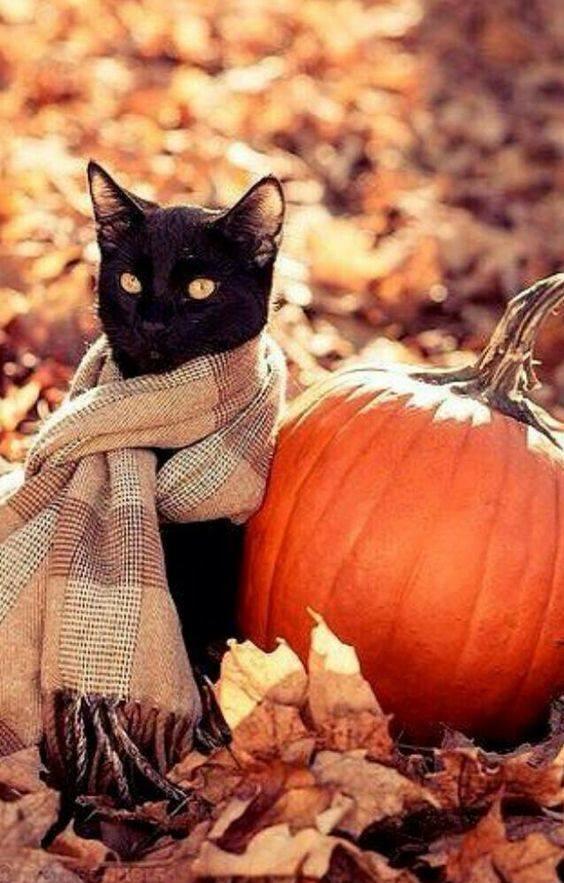 Felină autumnală.
